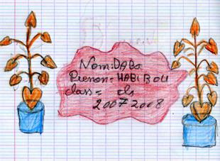 habibou1p